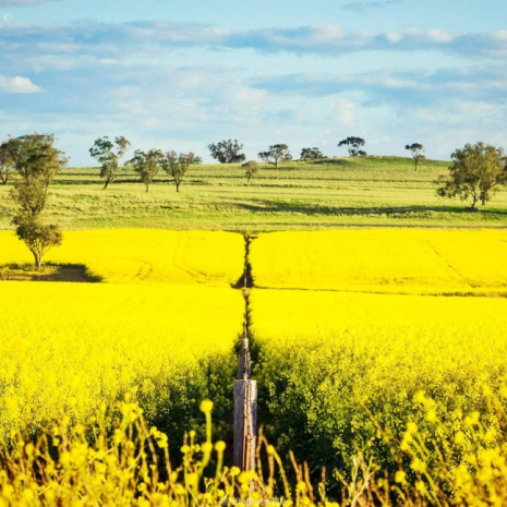 4.-Left-Of-The-Middle-Photography_-Merriwa-1024x648